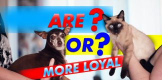 Are Or More Loyal
